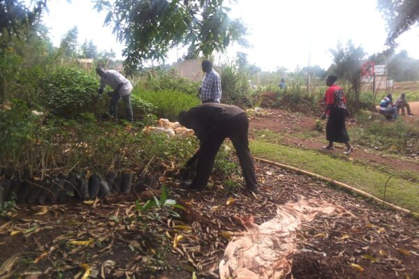 Uganda – Tree nurseries in Hoima municipality